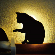 �yCAT WALL LIGHT/�L���b�g �E�H�[�� ���C�g�z�@���킢���L��LED�E�H�[�����C�g�@���������