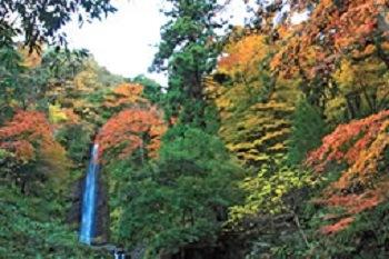 紅葉の名所 『養老公園』
