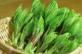 1月に植えつけられる野菜「コシアブラ」