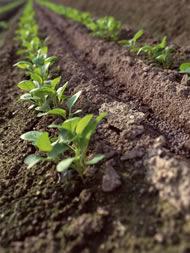 有機栽培の土作り