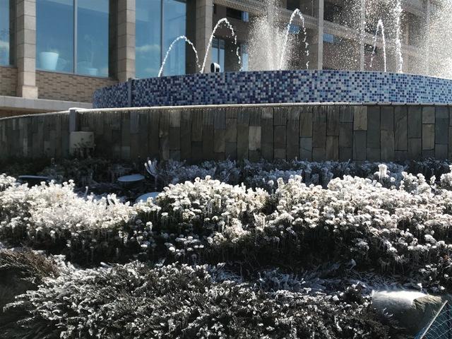 氷のアート 〜樹氷の花〜