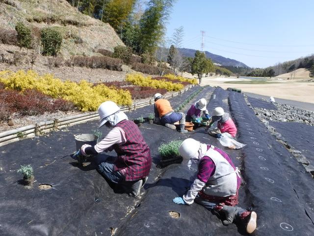 芳しきラベンダーの香り 〜№4ラベンダー植栽〜