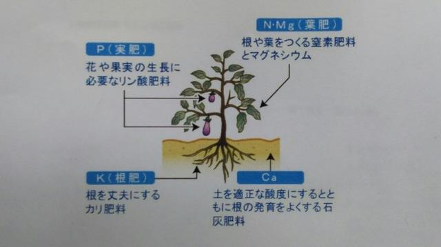 野菜栽培について 〜土作り編④〜