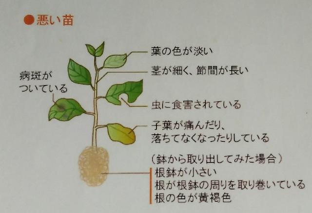 野菜栽培について 〜苗の栽培編①〜