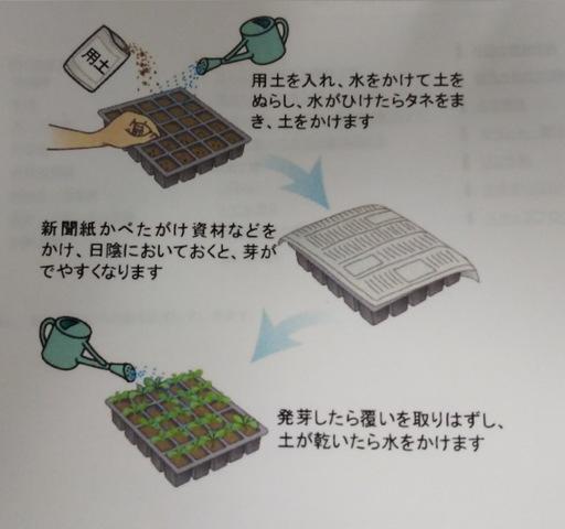 野菜栽培について 〜苗の栽培編②〜