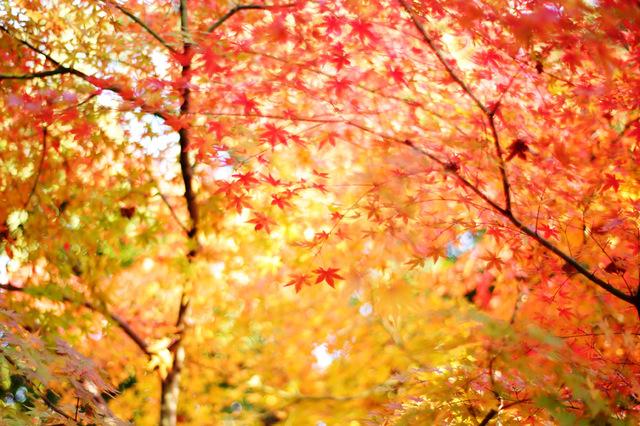 秋のロングランコンペ