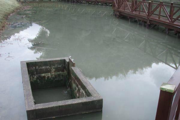 4番ホール蓮の池 水溜め開始
