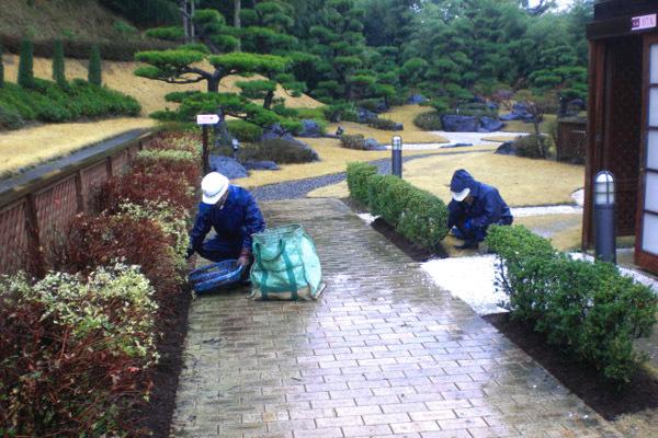 植栽のマルチング