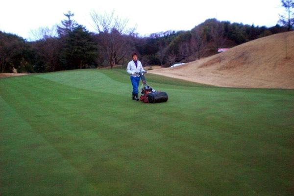 朝のグリーン刈り