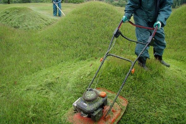 マウンドの芝刈り