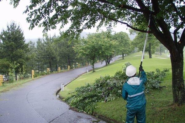 樹木の下枝剪定