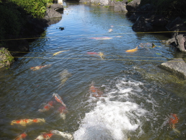 アウト練習グリーン池