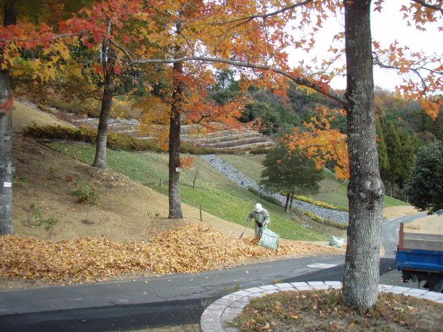 落ち葉の木 その2