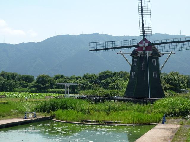 大きな風車と季節の花「アクアワールド水郷パークセンター」