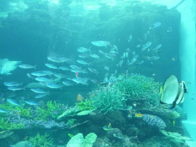 名古屋港水族館④  〜旅行ブログ〜