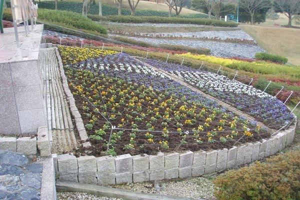 冬季メイン花壇 パート7