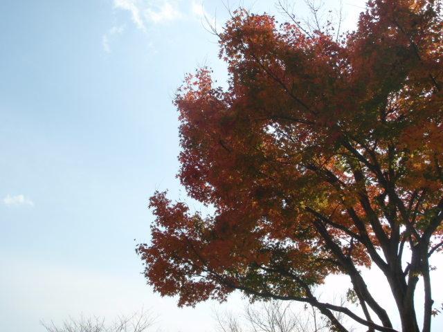 多度の紅葉 その1