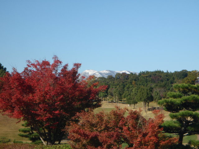 多度の紅葉から雪山を望む