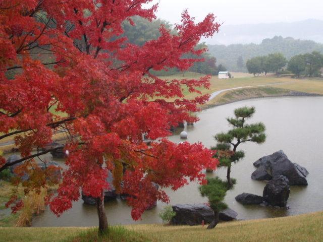 初冬の雨に紅葉から池を望む