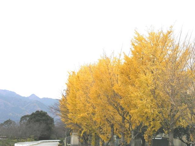 青春の並木道〜旅行ブログ〜