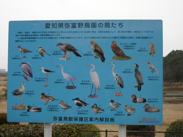 愛知県弥富野鳥園 〜旅行ブログ〜