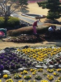ホテル前の花壇を整備しました。