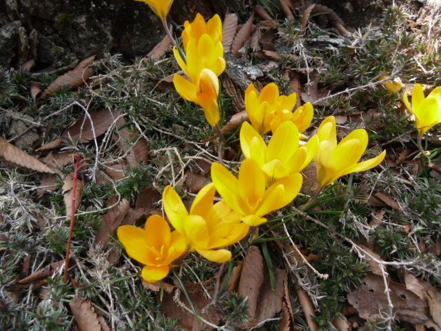 始まりの春