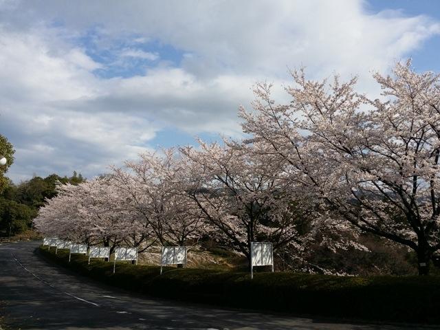 ホテル多度温泉、先週に引き続き『桜』です