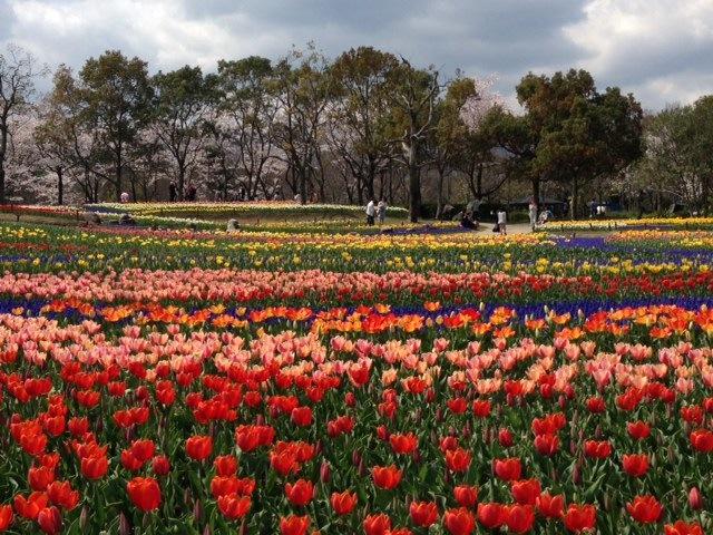 国営木曽三川公園 『チューリップ祭Ⅱ』