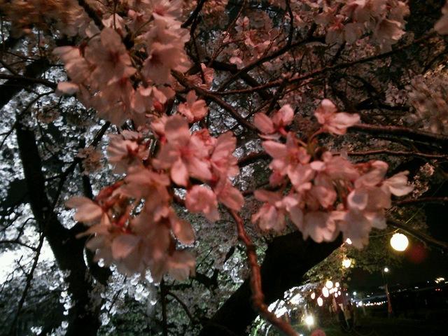 桜舞い散る・・・