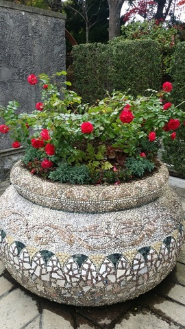 四季咲きの薔薇