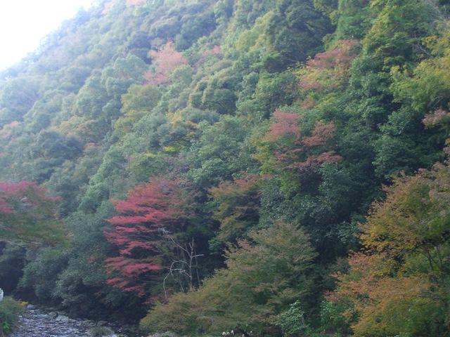 多度峡の紅葉