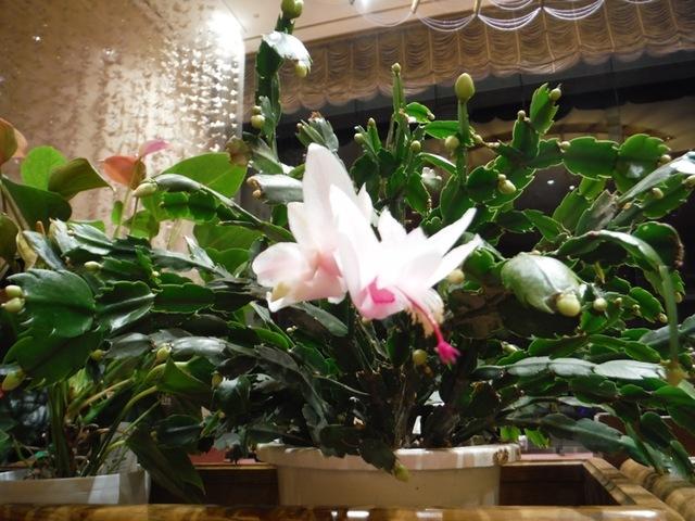 ホテルロビーの植物