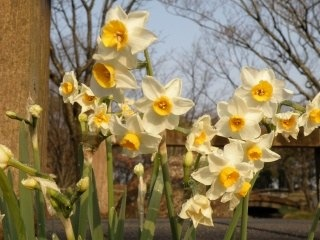 季節の花々を♪