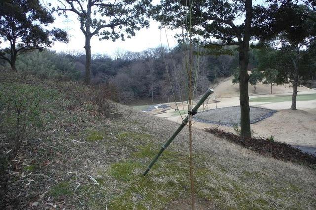 ハナモモの植栽