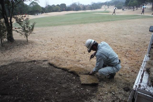 裸地部の芝張替え作業