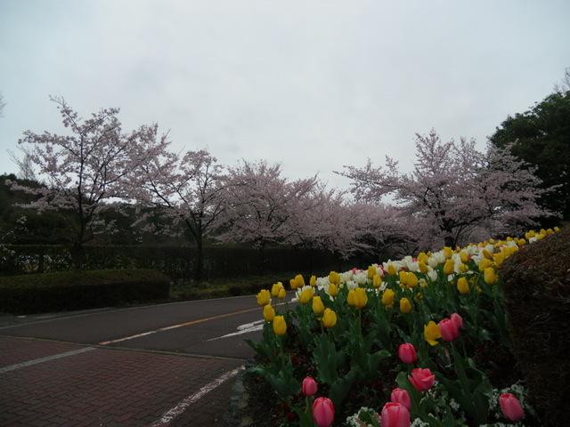 花々の競演