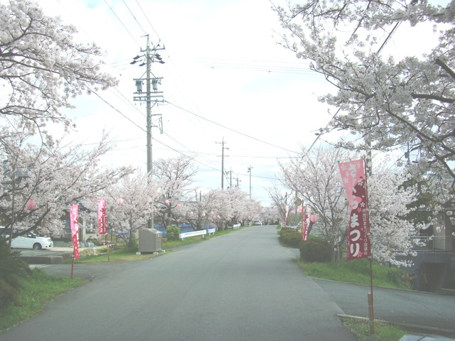 東海道桜並木
