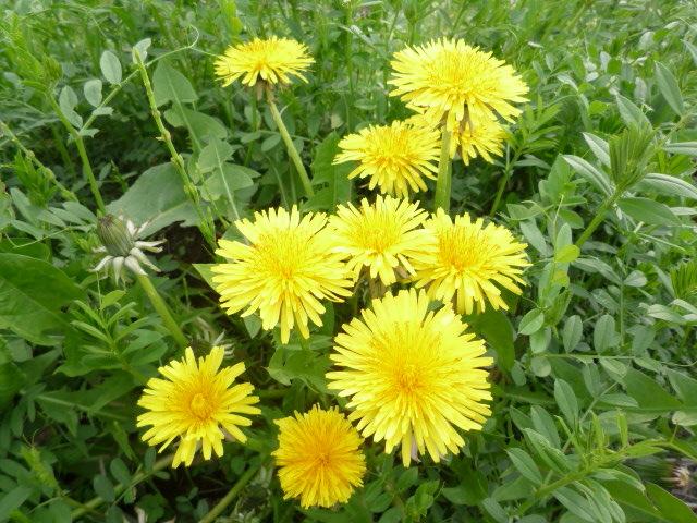 黄色い花 Ⅰ