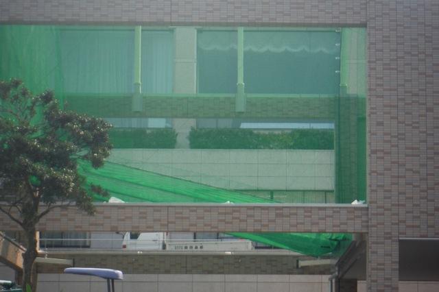 レジデンス新館の打球練習場から見える植栽♪レイランディー♪