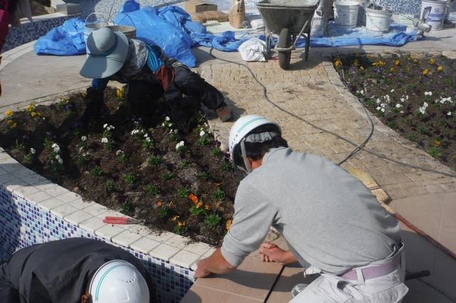 レジデンス新館花壇一年草植栽〜ビオラ〜