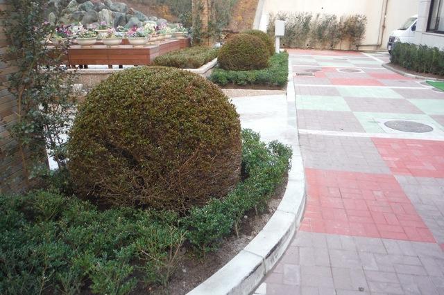 サツキとタマツゲで素敵な庭園になりました。