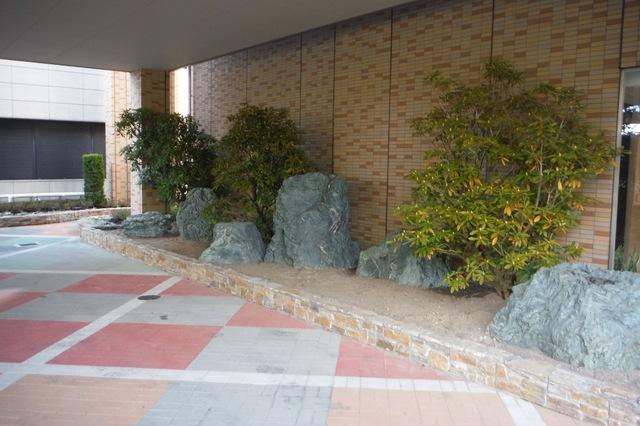 大きな石楠花植栽完了♪
