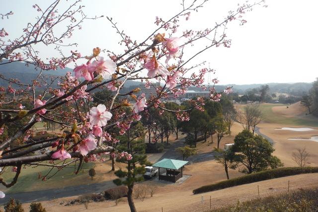 閏2月 〜梅は咲いたか、桜はまだかいな〜