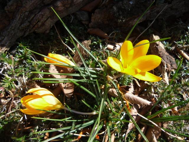 春を見つけてデトックス