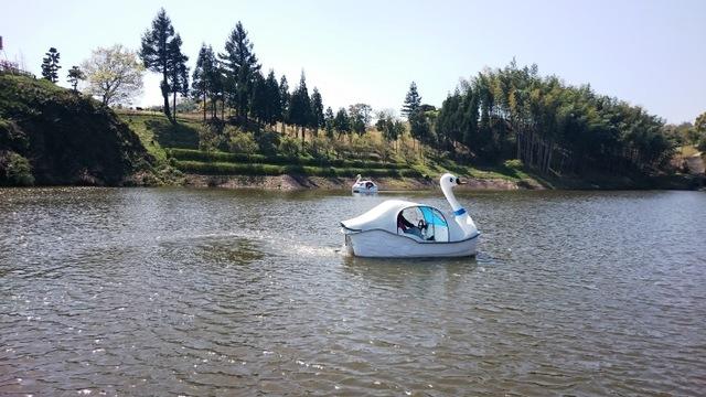白鳥池のスワンボート