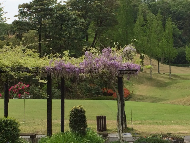 淡い色した、藤の花