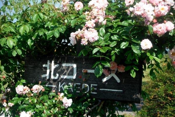 回遊式庭園の薔薇