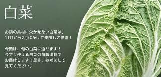 冬野菜の王様「白菜」