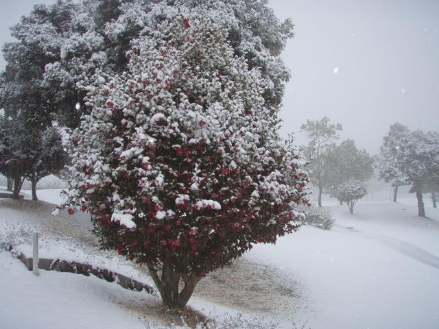 またしても積雪